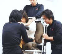 骨や関節を直接触って動きを確かめながら最適な位置を見つける技法